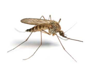 Κουνούπια πρόληψη