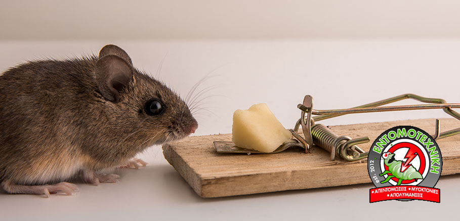 Μικρό ποντίκι μπροστά από φάκα. Βασική ποντικοπαγίδα για ποντίκια στο σπίτι
