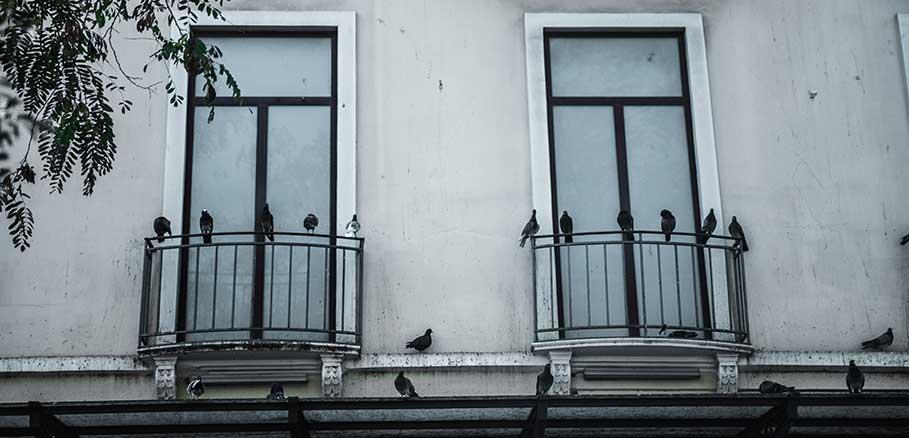Κοπάδι από σκουρόχρωμα περιστέρια στο μπαλκόνι κτιρίου