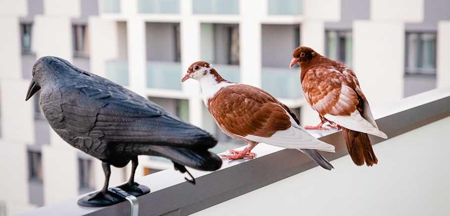 Δύο περιστέρια στο μπαλκόνι κτιρίου κάθονται δίπλα σε πλαστικό απωθητικό κοράκι