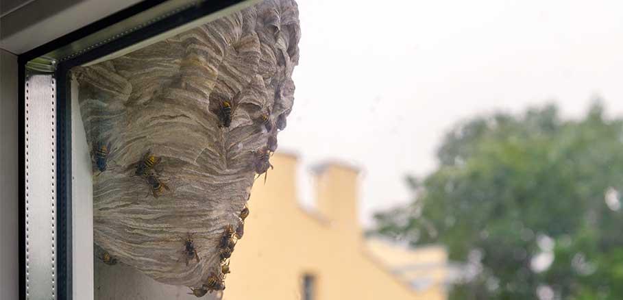 Σφηκοφωλιά με σφήκες έξω σε εξωτερικό κατώφλι παραθύρου