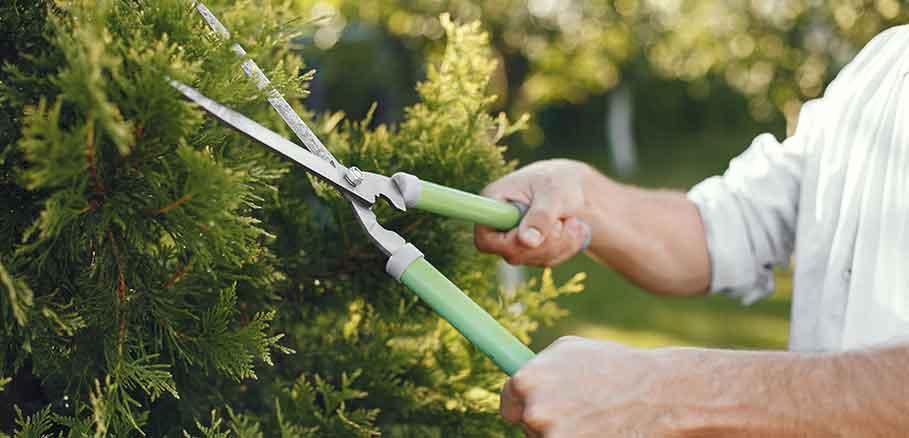Άνδρας κλαδεύει θάμνο με πράσινο ψαλίδι κλαδέματος.