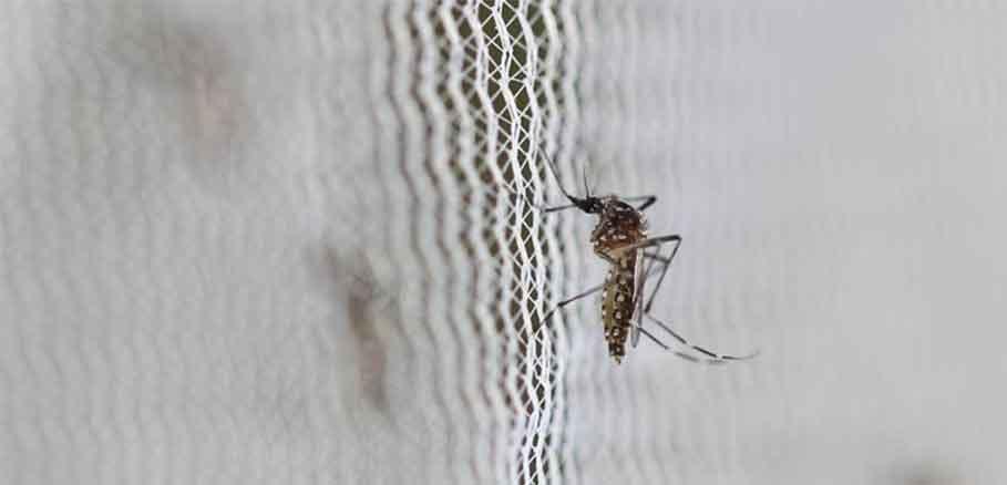 Κουνούπι πάνω σε λευκό διχτάκι κουνουπιέρας για καταπολέμηση κουνουπιών στο σπίτι.